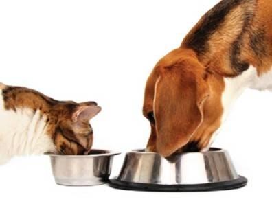 Alimentazione Naturale Per Cane E Gatto
