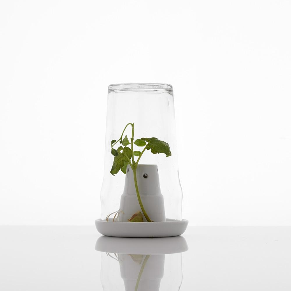 Bicchiere con fiore all'interno