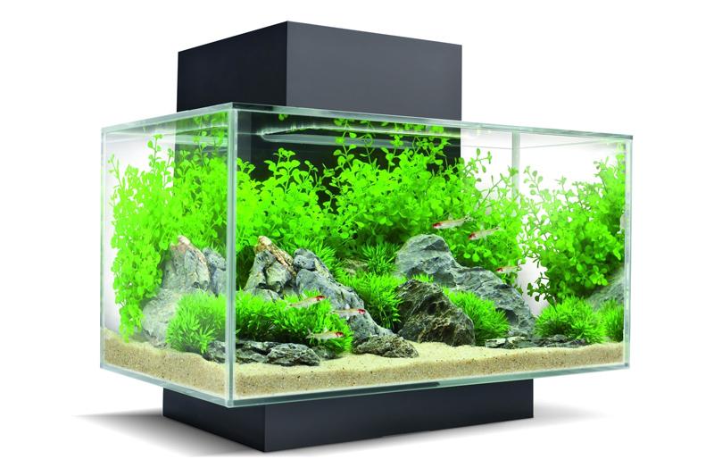 Vendita online acquari acquario marino e di acqua dolce for Acquario shop online