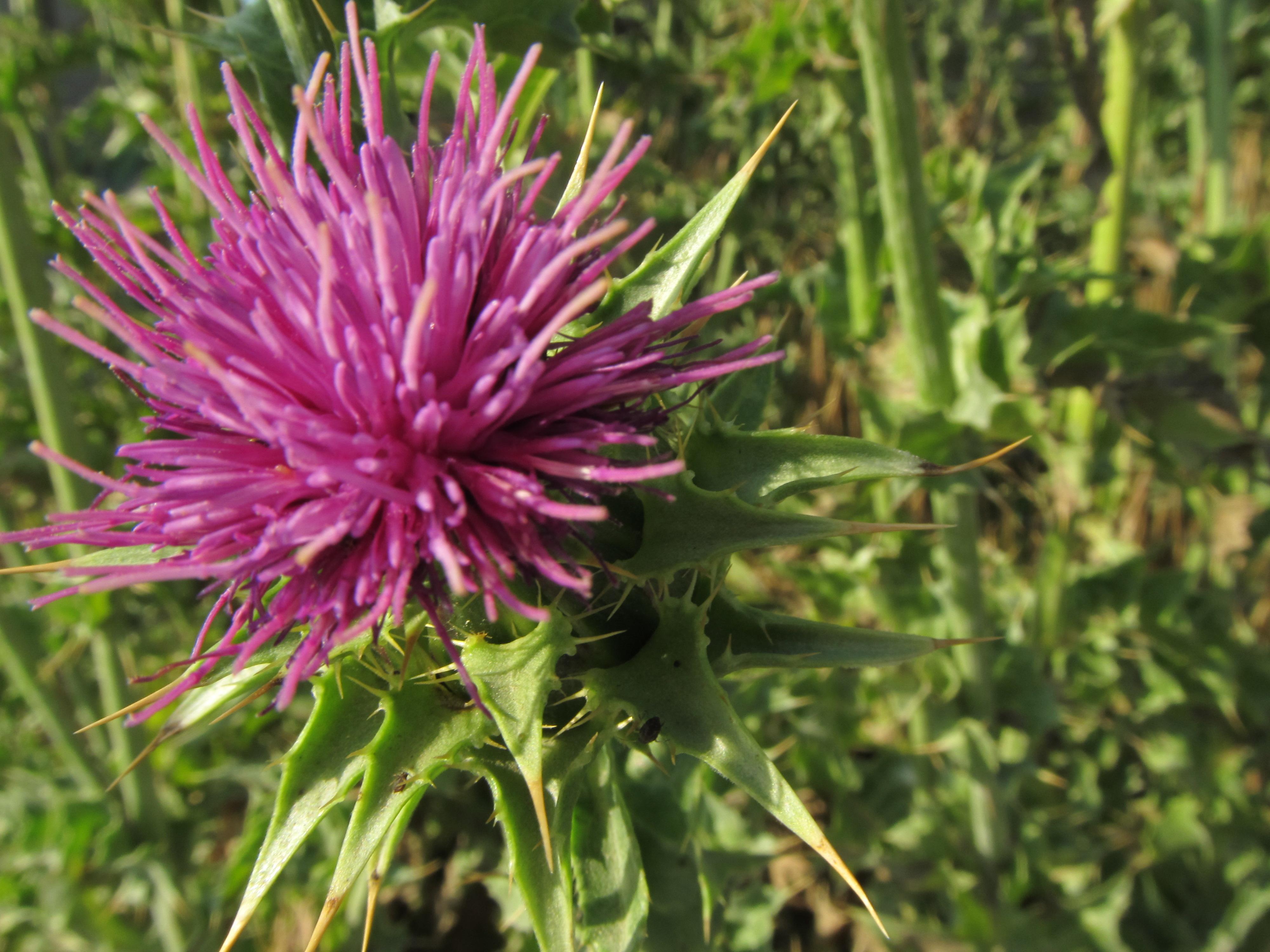 4 piante efficaci per depurare l'organismo