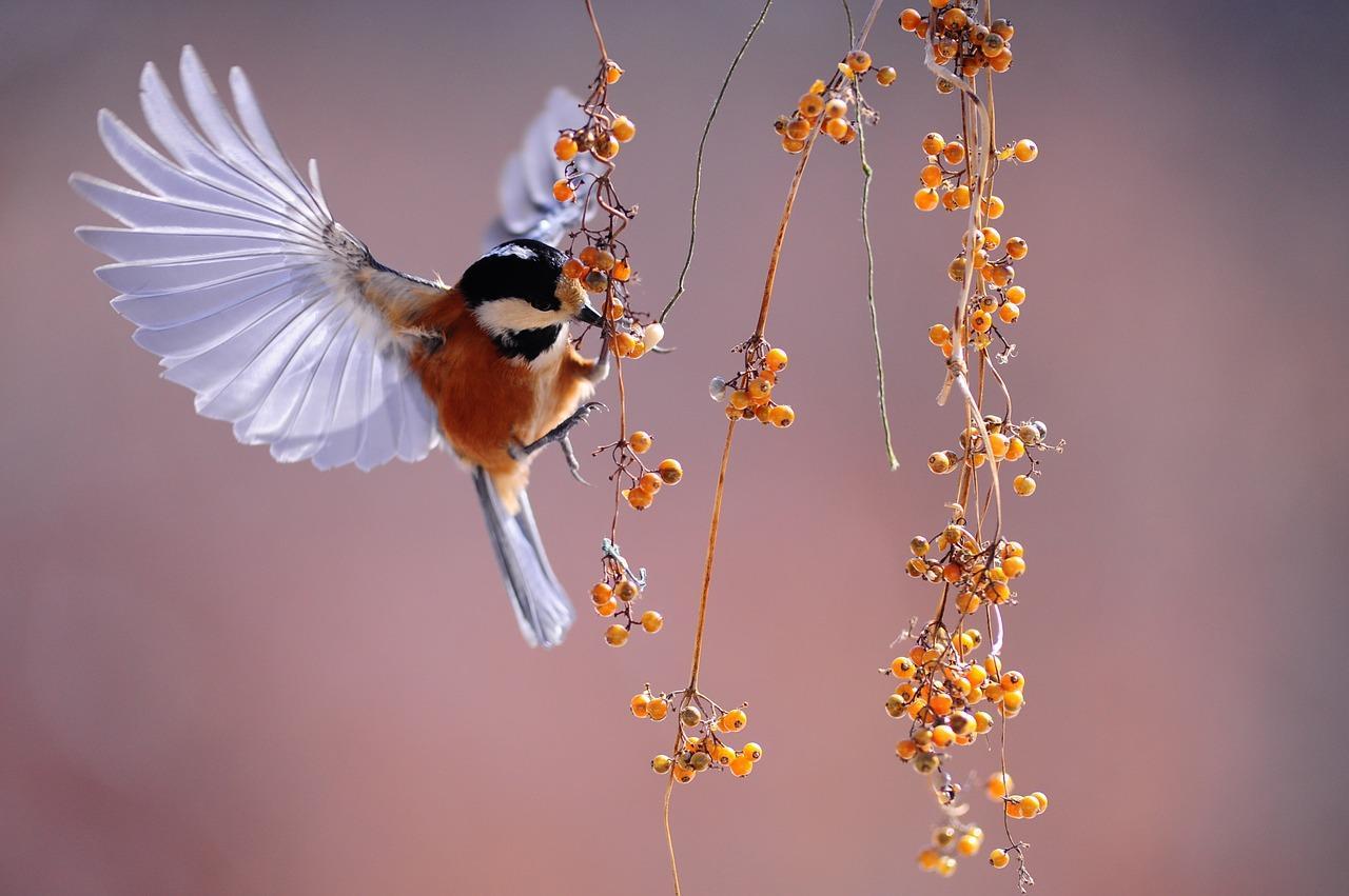 Calendario Fiere Ornitologiche.Associazioni Ornitologiche Riunite Fiere Uccelli