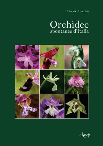 Orchidee spontanee d'Italia
