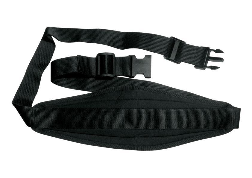 Cintura pettorale