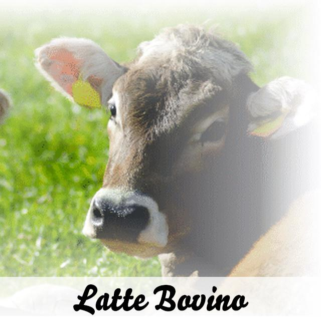 Formaggi di latte bovino
