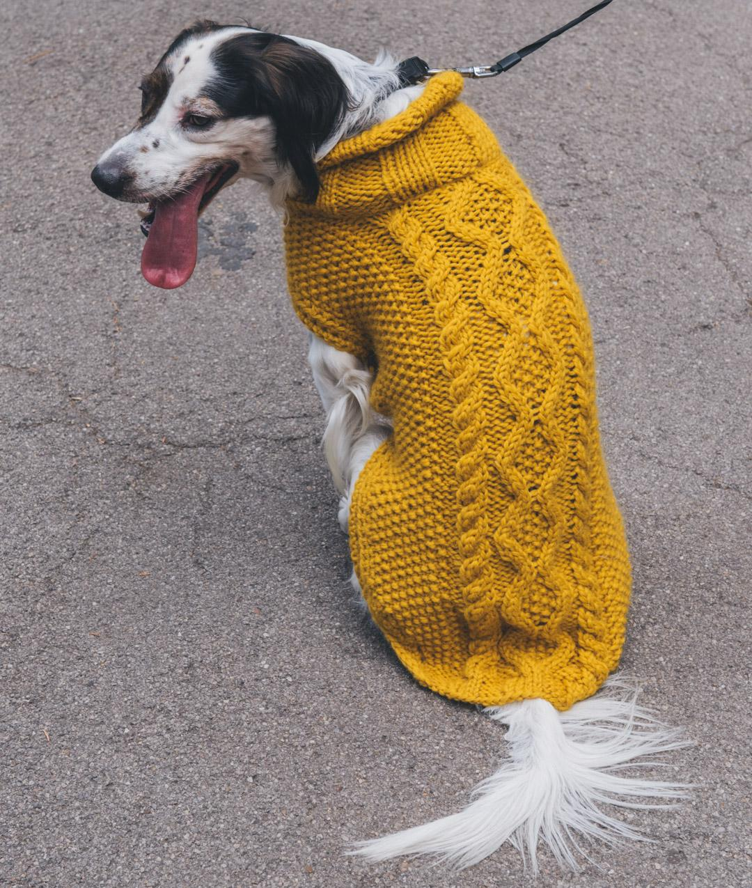 Pet Collection - Pet Collection -  - PINO DOG COAT - 1