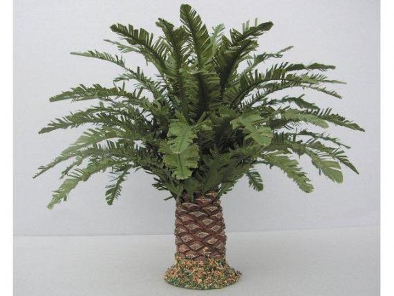 Palma nana cm. 9