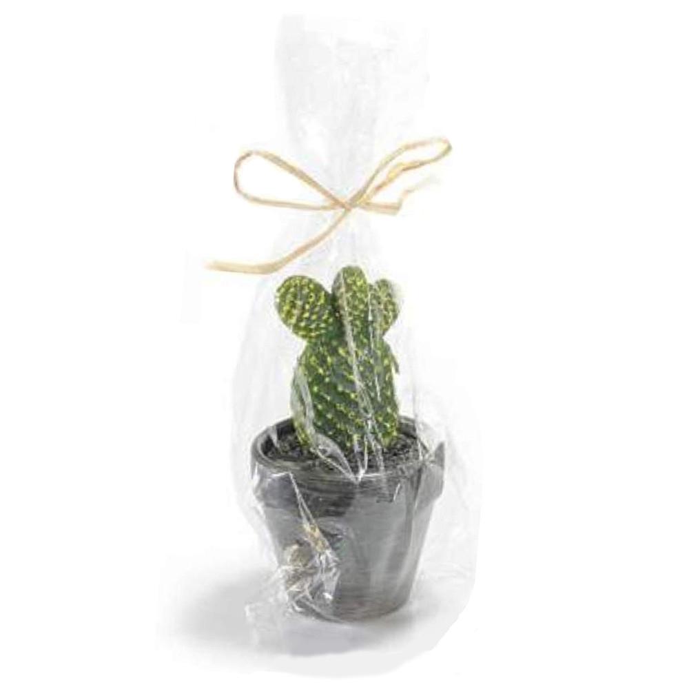 Candela a forma di pianta grassa in vasetto di terracotta