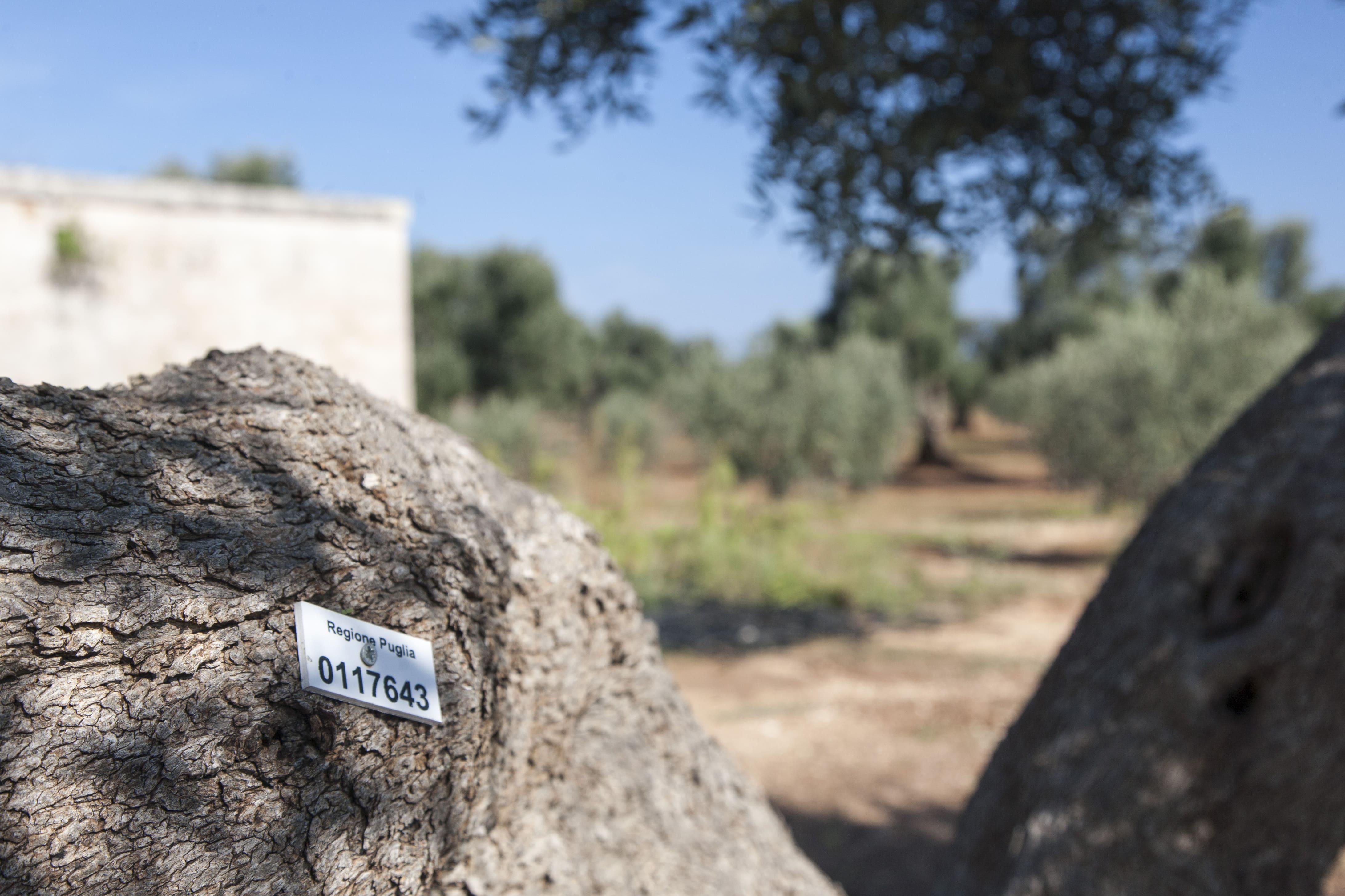 Antica Masseria Pugliese4
