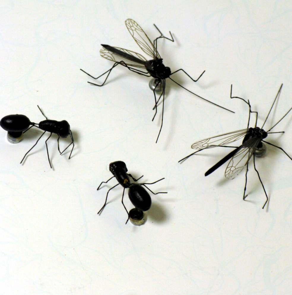 Magneti insetti confezione 4 pezzi
