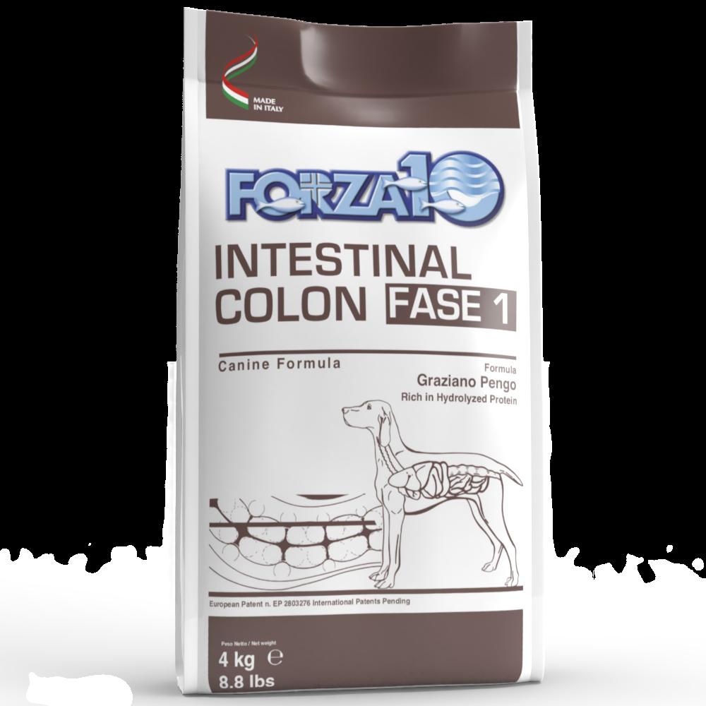 Intestinal Colon Fase 1