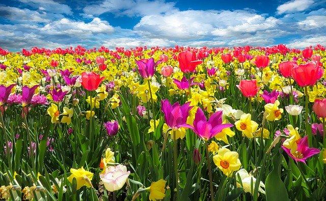 spring-awakenin