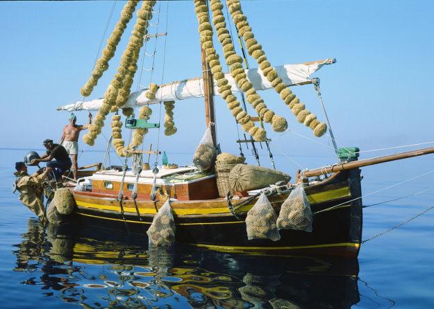 barca Rosenfeld spugnificio