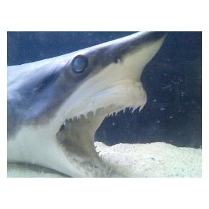 squali-membrana