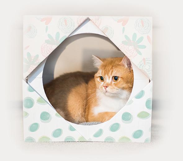 SCHESIR CAT UMIDO IN BUSTA - edizione speciale