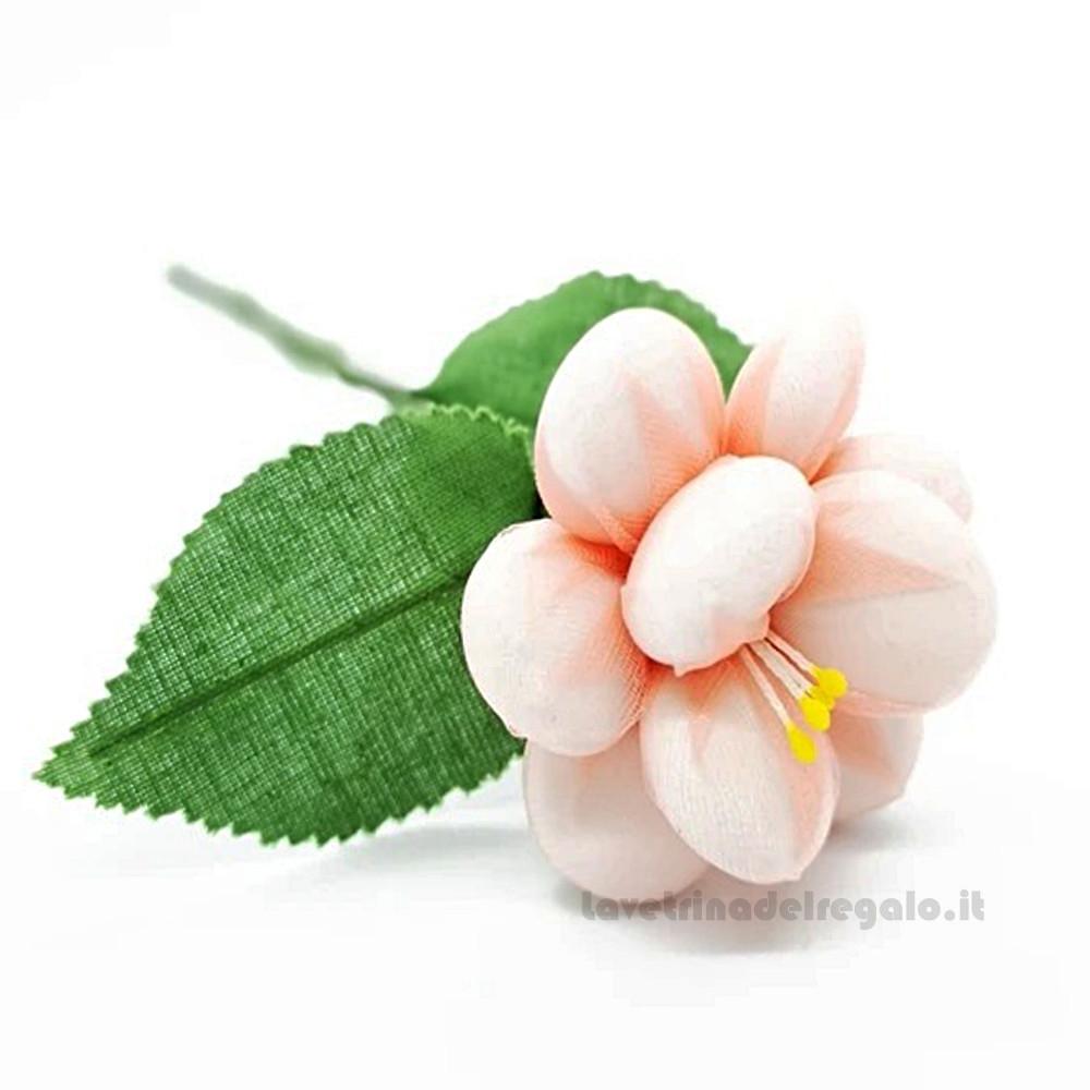 Rosa selvatica Fiore di Confetti William Di Carlo Sulmona - Italy