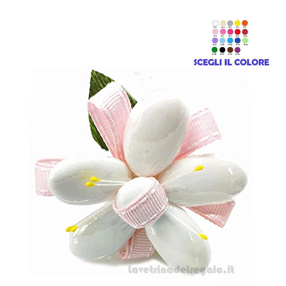 Gazania rosa Fiore di Confetti William Di Carlo Sulmona - Italy