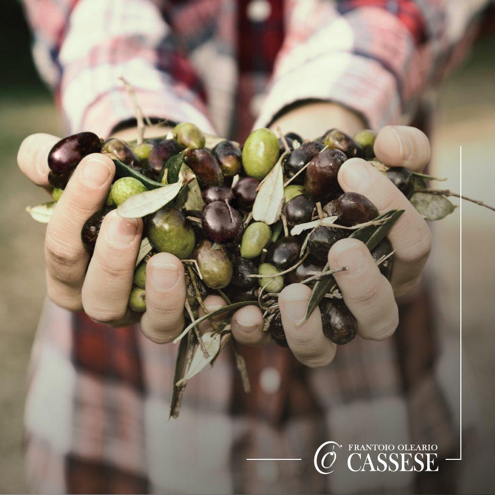 olive 100% pugliesi