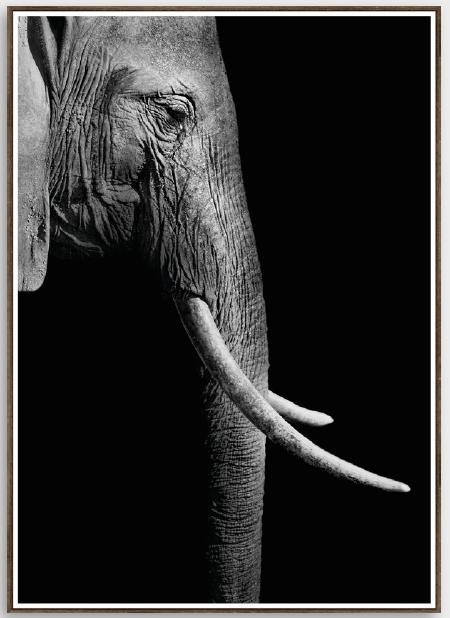 Tela elephant