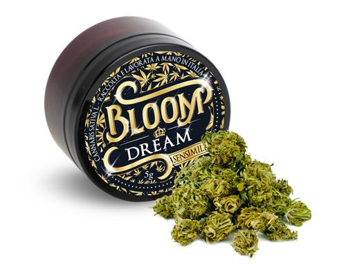 BLOOM DREAM