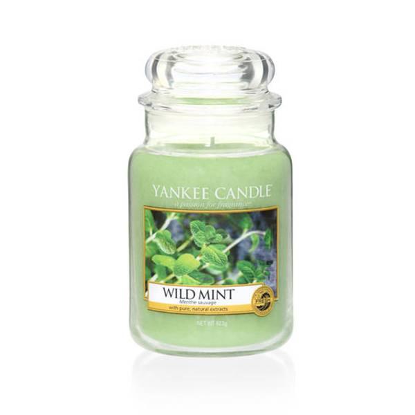 Yankee Candle - WILD MINT - GIARA GRANDE