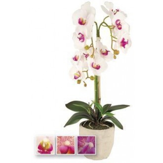 Vea Pianta Orchidea 60 cm Klamore Piantina in Vari Colori Assortiti Arredare e Decorare Casa Con Stile