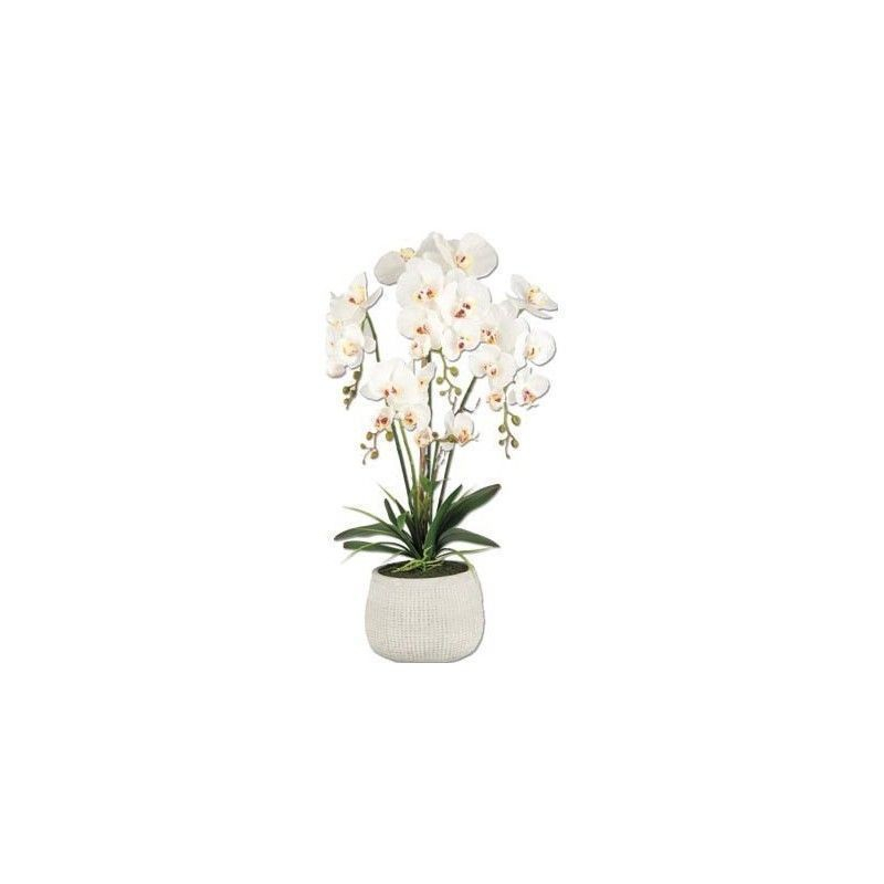 Vea Pianta Orchidea King 72 cm Pianta Colorata Interno Casa Arredare con Stile
