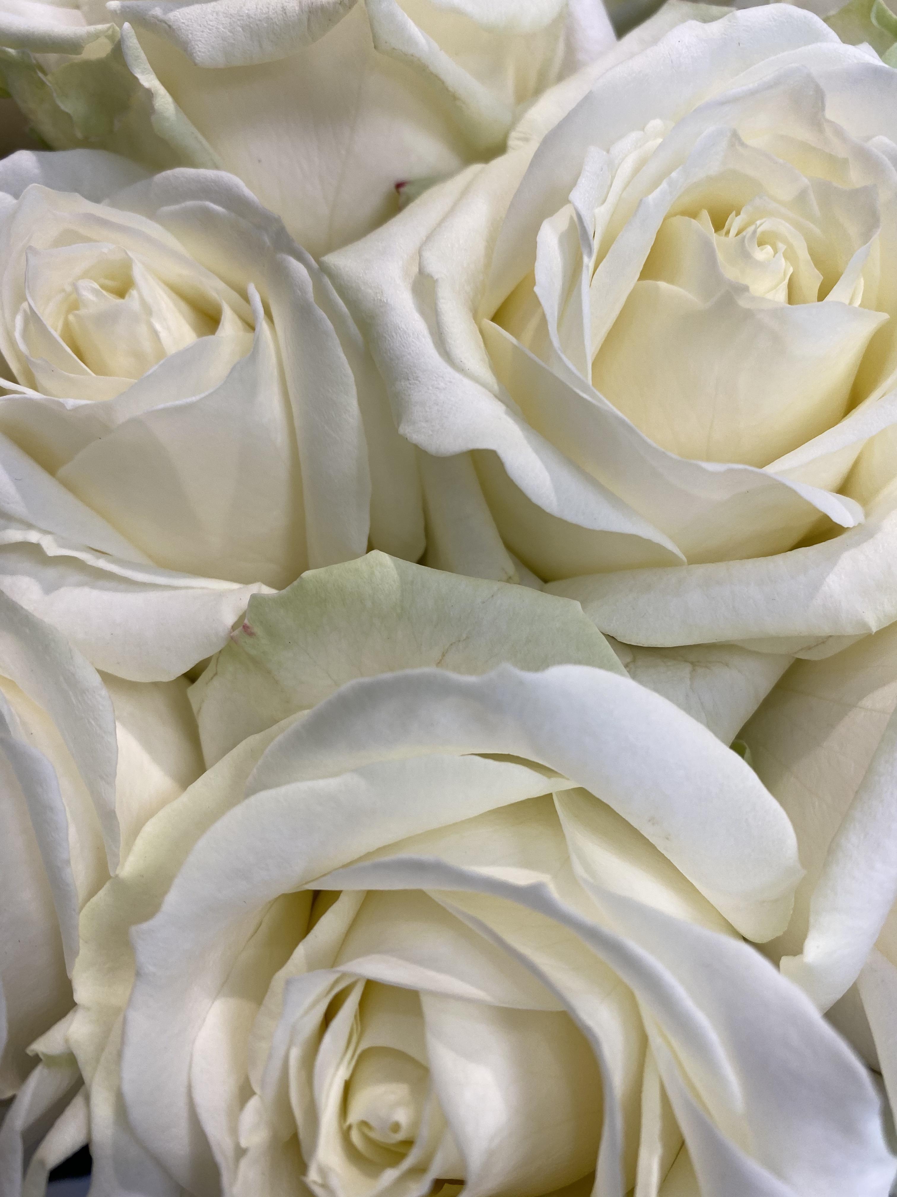 Mazzo di rose bianche a gambo lungo - Scegli il numero di rose che vuoi