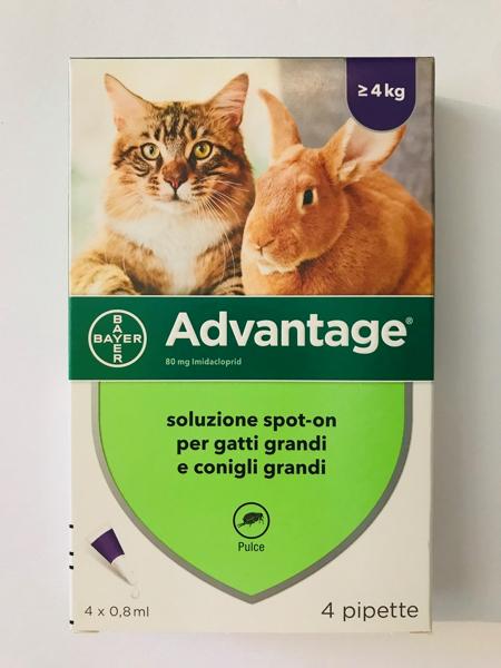 Advantage per gatti piccoli e conigli piccoli 4 pipette ad 0,8 ml