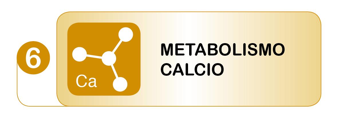 Test Metabolismo Calcio