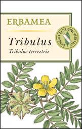 TRIBULUS frutti e. s.+in.
