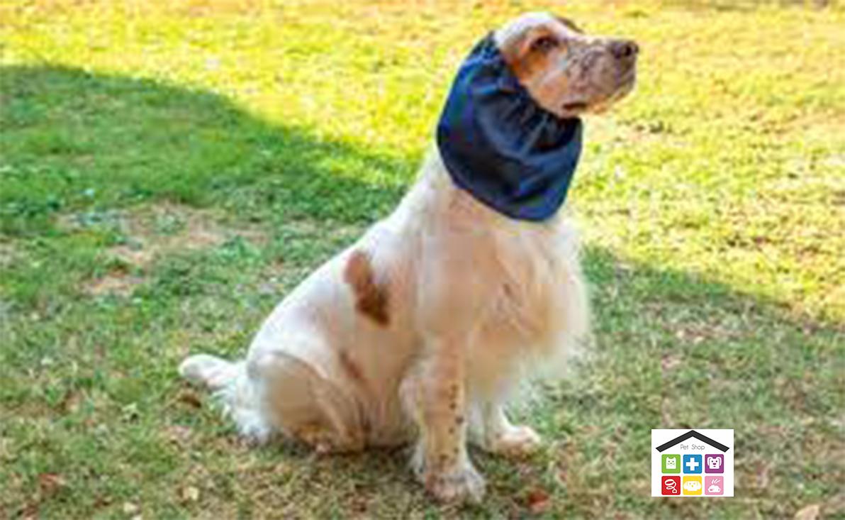 Leo pet paraorecchie per cani vari colori