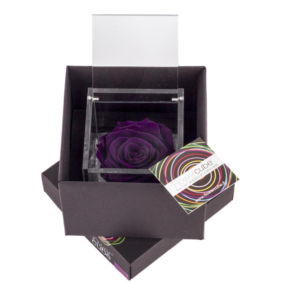 Flowercube rose stabilizzate colore viola