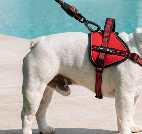 ADVANCE Pettorali Tecnici Gimdog
